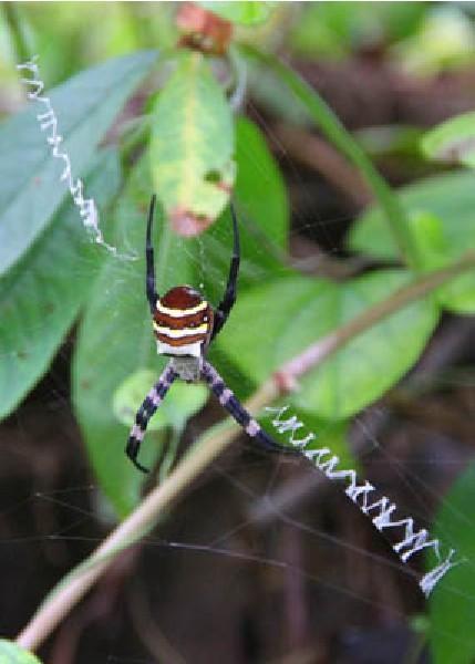 奇特蜘蛛写出英文字 -神奇动物-三支脚人才网