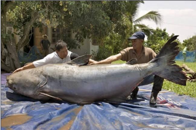 地球上最大的动物-神奇动物-三支脚人才网