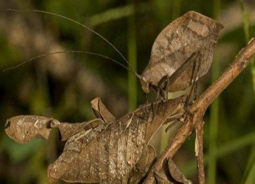 自然界的隐身高手-神奇动物-三支脚人才