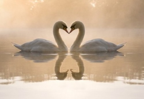 动物界有哪些奇葩恋?