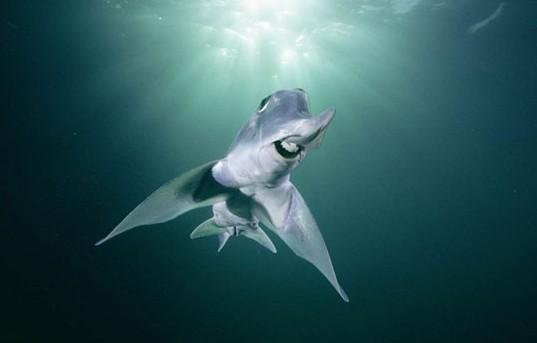 自然界中最怪的18种动物