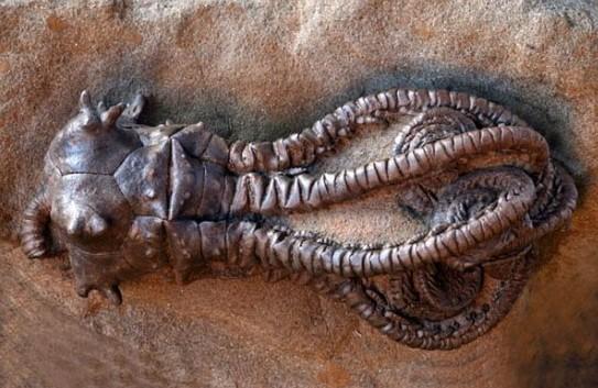 """两只大耳朵?一双大而黑的眼睛?以及袋鼠一样的双腿?显然?与它的小身体不成比例?所以?这个夜间活动的长耳跳鼠被描述为""""沙漠中的米老鼠倒也不奇怪。  三眼恐龙虾?学名佳朋鲎虫。是已知的鲎虫中中国唯一发现的一种。属足亚纲?背甲目?是一类小型的甲壳动物。  印尼妇女妮塔日前在煮章鱼时?"""