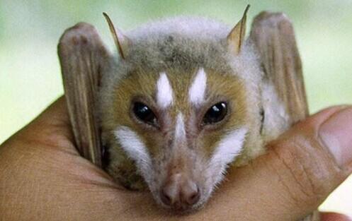 世界上最恐怖怪异的动物