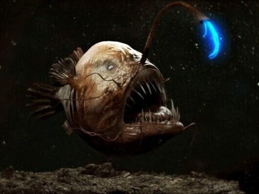 海底最可怕的动物图片