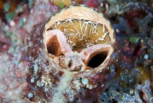 18张争奇斗艳的深海生物-神奇动物-三支脚人才网