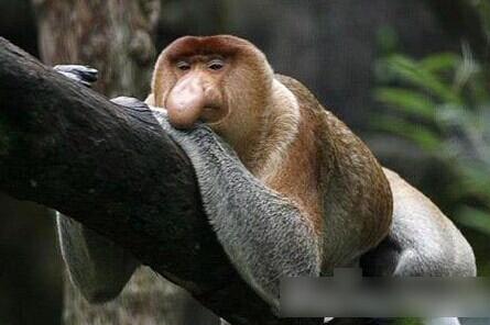 世界最丑十大异形动物-神奇动物-三支脚人才网