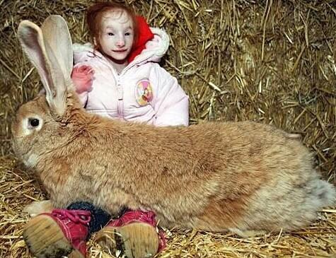 世界上最小的女孩有如玩具熊般大小