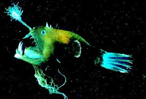 奇特发光生物大盘点-神奇动物-三支脚人才网
