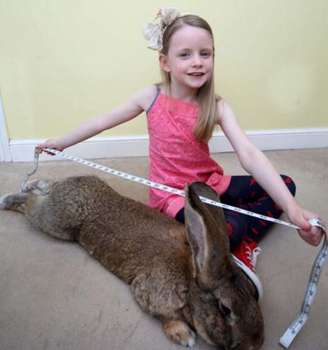 世界最大兔子体长1.2米重45斤-神奇动物-玉环纵纵横
