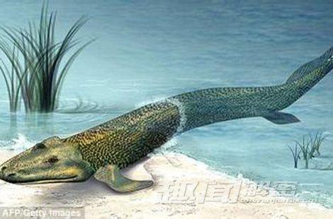 即将灭绝动物金鱼