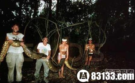 世界上最大的蛇-神奇动物-玉环纵纵横-三支脚人才网