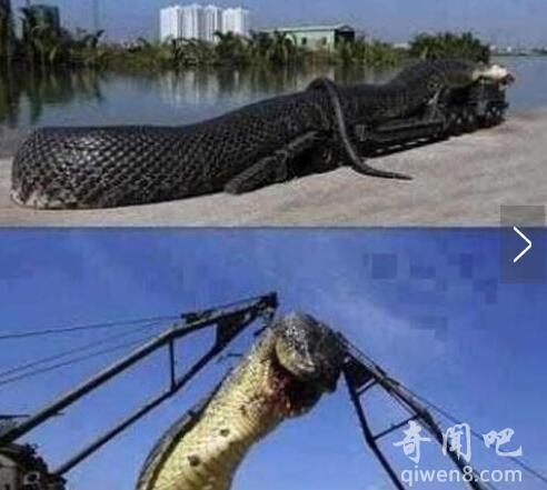 红海巨蛇是怎么回事?红海巨蛇图